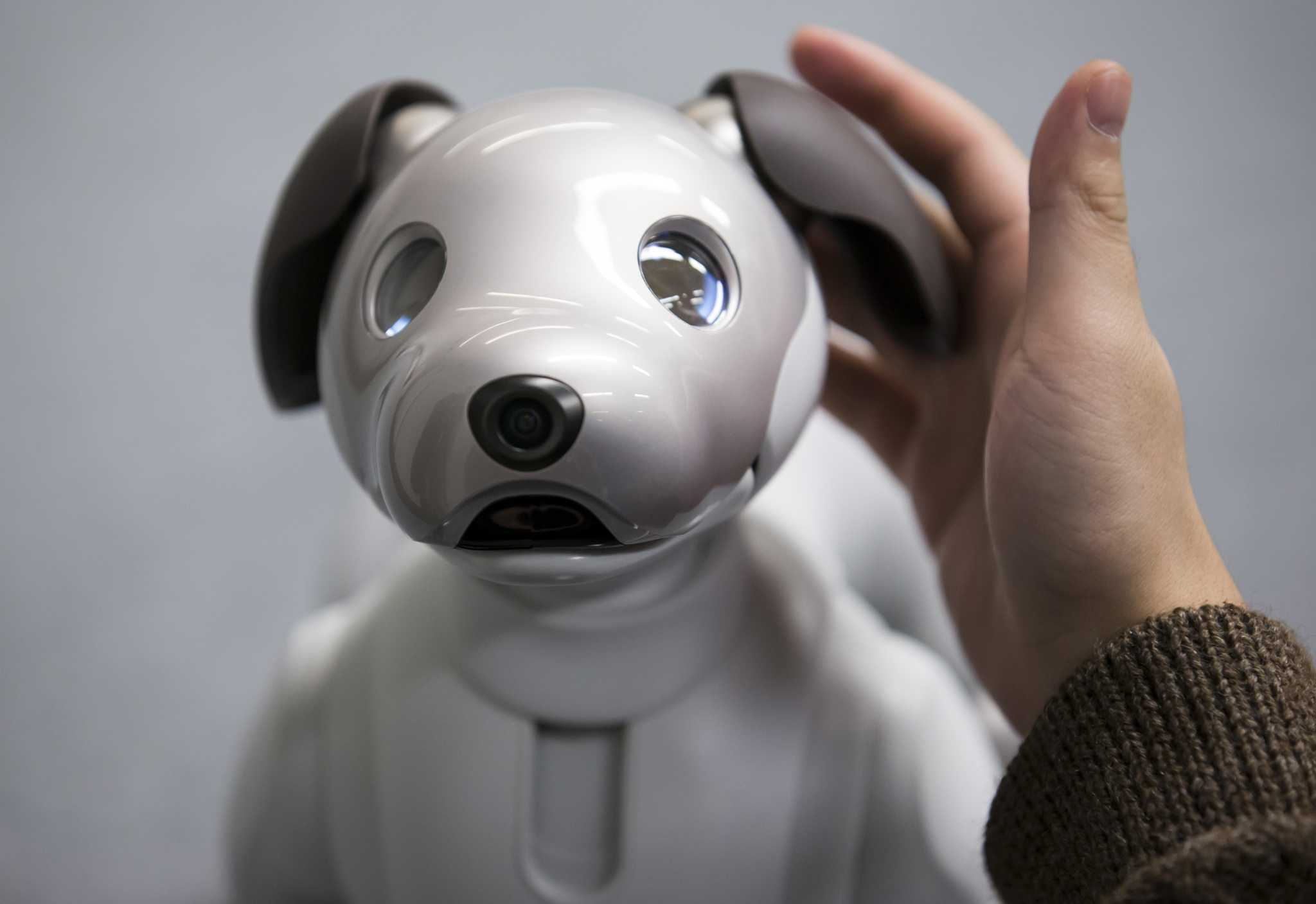 Aibo the robot dog will melt your heart with mechanical precision - SFGate