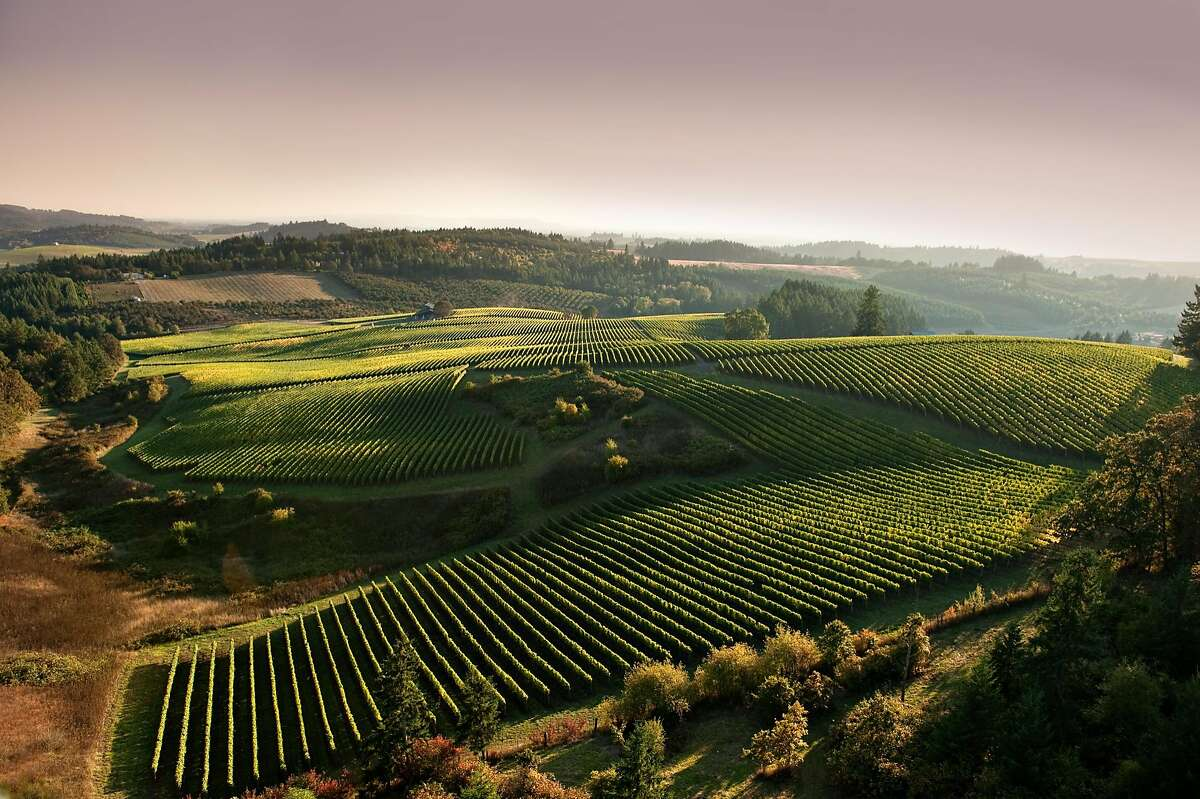 An aerial shot of the Shea vineyard, one of the most renowned parcels for Pinot Noir in Oregon's Willamette Valley. Full credit should be: Oregon Wine Board/CWK Photography