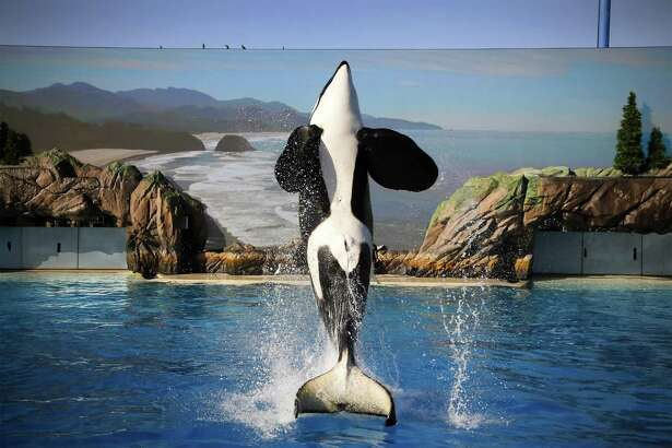 "SeaWorld Entertainment and two former company officials have agreed to settle fraud charges stemming from the company's public statements in the wake of the 2013 documentary film ""Blackfish,"" which negatively portrayed the company's treatment of orcas."