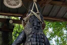 Livingston, Texas mayor, Judy B. Cochran, killed a 12-foot, 580-pound alligator Sunday, Sept. 16, 2018. It was in the same pond where her 5-year-old grandson hunted a beast in 2009.