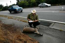 Douglas Long collects data from a male black-tailed deer along CA state route 13 in Oakland, Calif on Saturday, Sept. 18, 2010 and includes his findings into the California Roadkill Observation System where anyone, including Long's fellow wildlife conservationists submit pictures and other information about roadkill sightings in California. In Oakland, Calif. on Saturday, Sept. 18, 2010.
