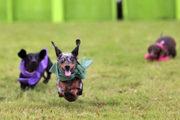 Enjoy traditional foods, beer, music and Wiener Dog Races at Oktoberfest in the Heights this Saturday.