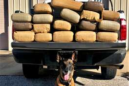During the traffic stop on U.S. 59 in Rosenberg Sept. 19, a task force officer and K-9 partner discovered 19 bundles of marijuana weighing approximately 202.5 pounds in an altered external fuel tank in the bed of the truck,.