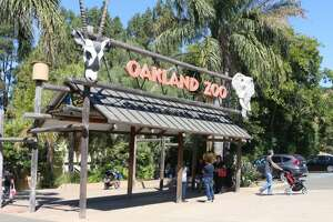 The 15th Annual Healthy Living Festival was held at Oakland Zoo on September 15.