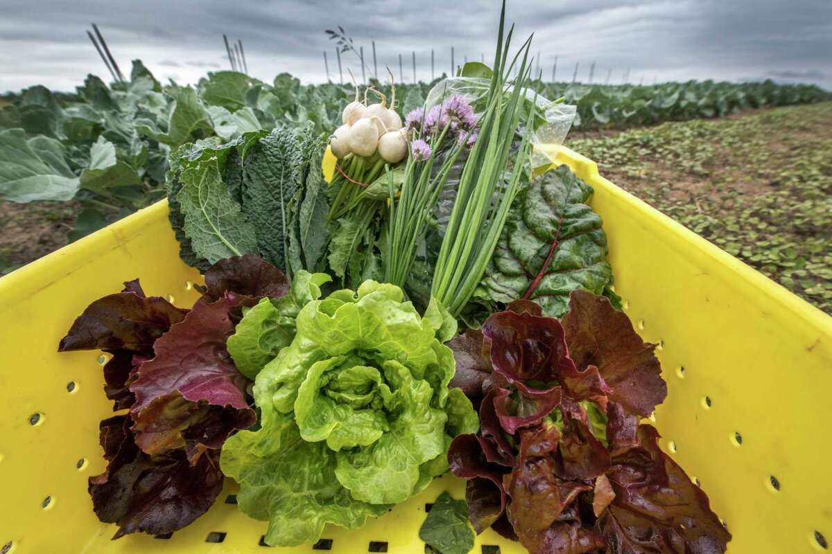 Freshly picked produce used by 9 Miles East Farm's food distribution business June 13, 2018 Schuylerville, N.Y. (Skip Dickstein/Times Union)