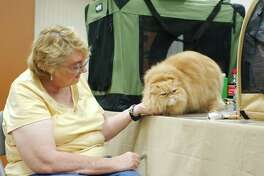 """Jana Loomis and """"Judge Theodore Russell"""" take time for grooming during the Fall Felines and Fun Cat Show at the Jimmy Burke Activity Center in Deer Park."""