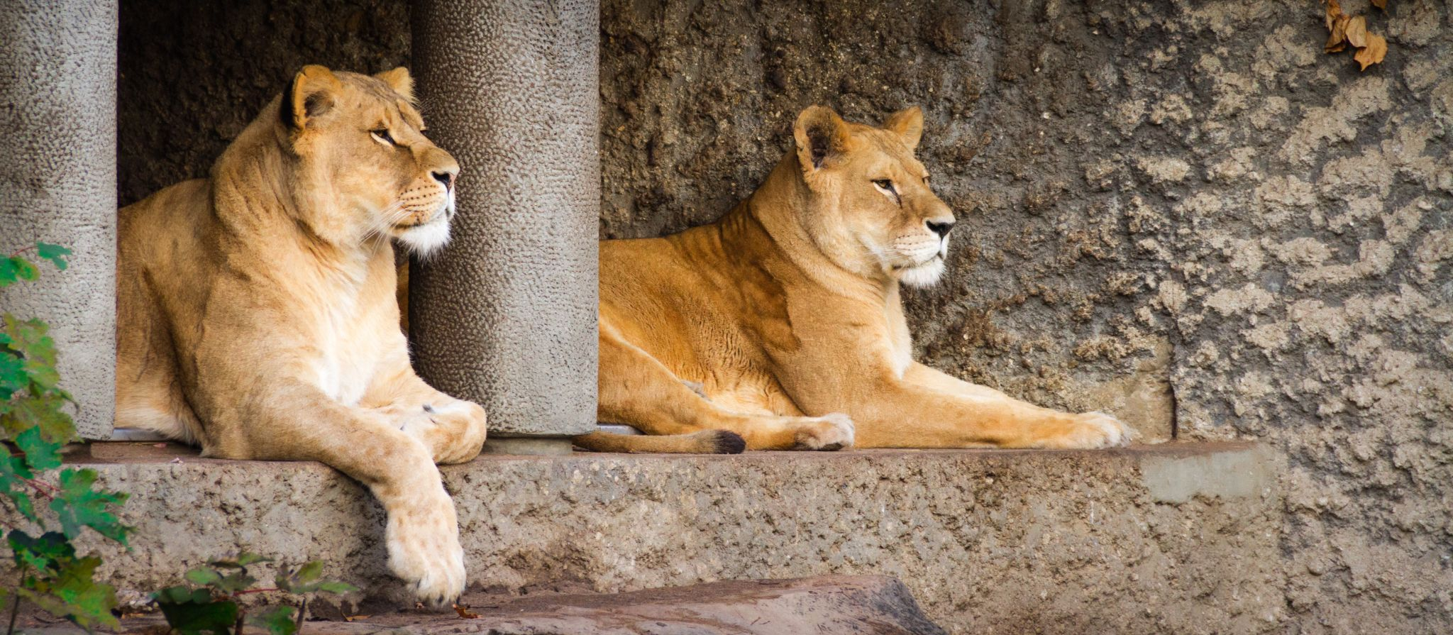 Police suspect Fresno Zoo trespasser bitten by lion was \'under the ...