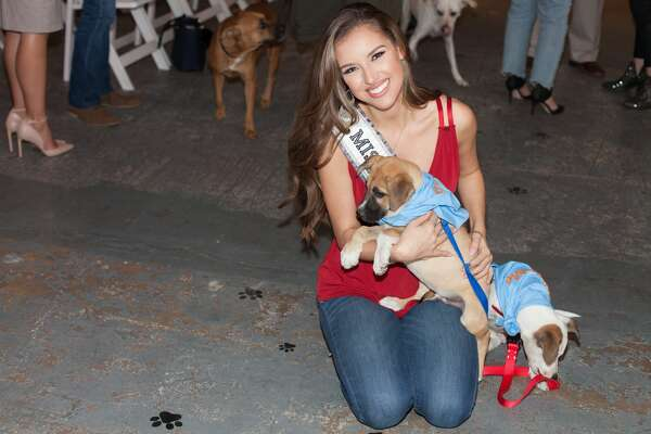 The first-ever Adopt the Runway, was held at the Blue Star Arts Complex on September 20, 2018 and featured San Antonio fashions along with adoptable animals from San Antonio shelters.