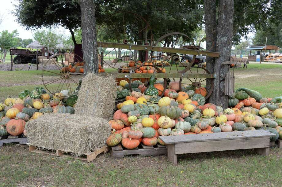 Blessington Farms Pumpkin Patch & Fall Festival510 Chisolm Trail, Wallis Sept. 24-Oct. 30 Saturdays and Sundays 10 a.m.-5 p.m.Enjoy hay and barrel train rides, a petting zoo and more.   Photo: Craig Moseley, Houston Chronicle / Staff Photographer / ©2018 Houston Chronicle