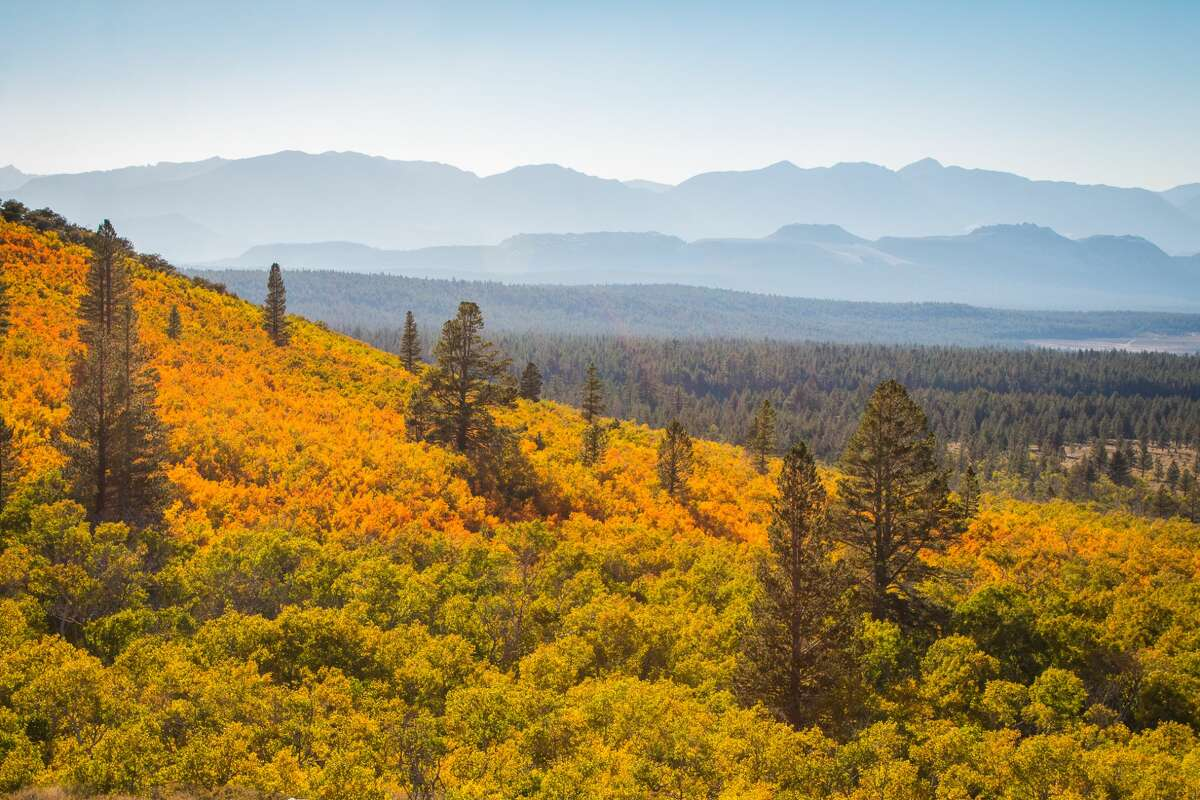 Sagehen Summit in Mono County is coated with fall foliage at peak conditions.
