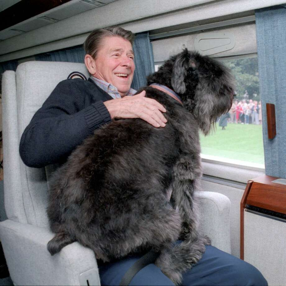 "President Ronald Reagan's dog Lucky started as a ""tiny ball of black fluff,"" Nancy Reagan said, but soon became the size of a ""pony."" Photo: /Contributed Photo"