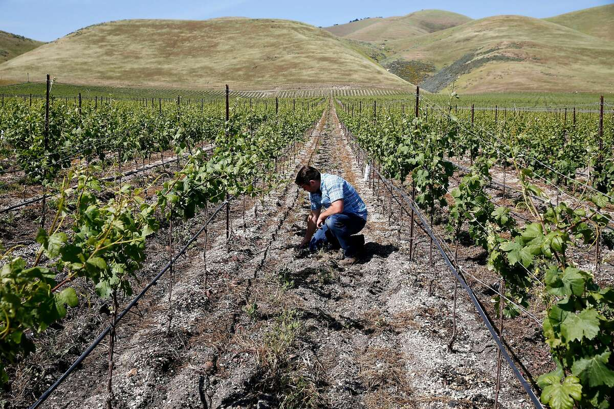 FILE--Joe Wagner inspects the dirt in the Clark and Telephone vineyard in Santa Maria, Calif. on April 18, 2016.