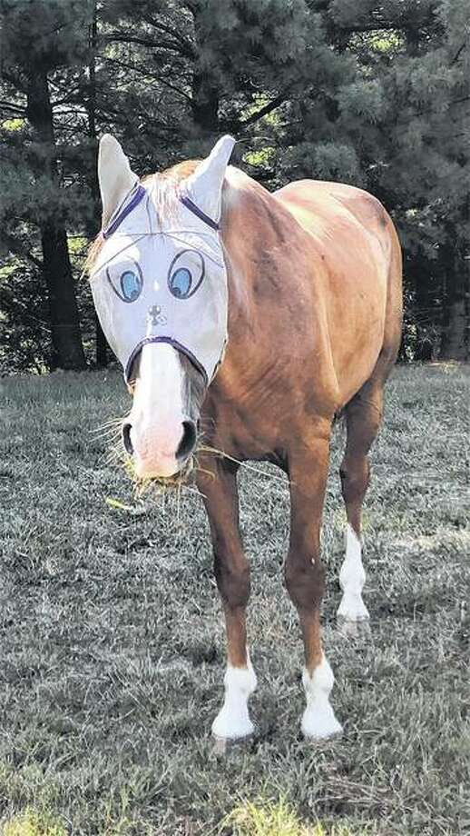 A horse sends a wide-eyed message to bugs to stay away. It is wearing an insect mask to keep pests away from its eyes.