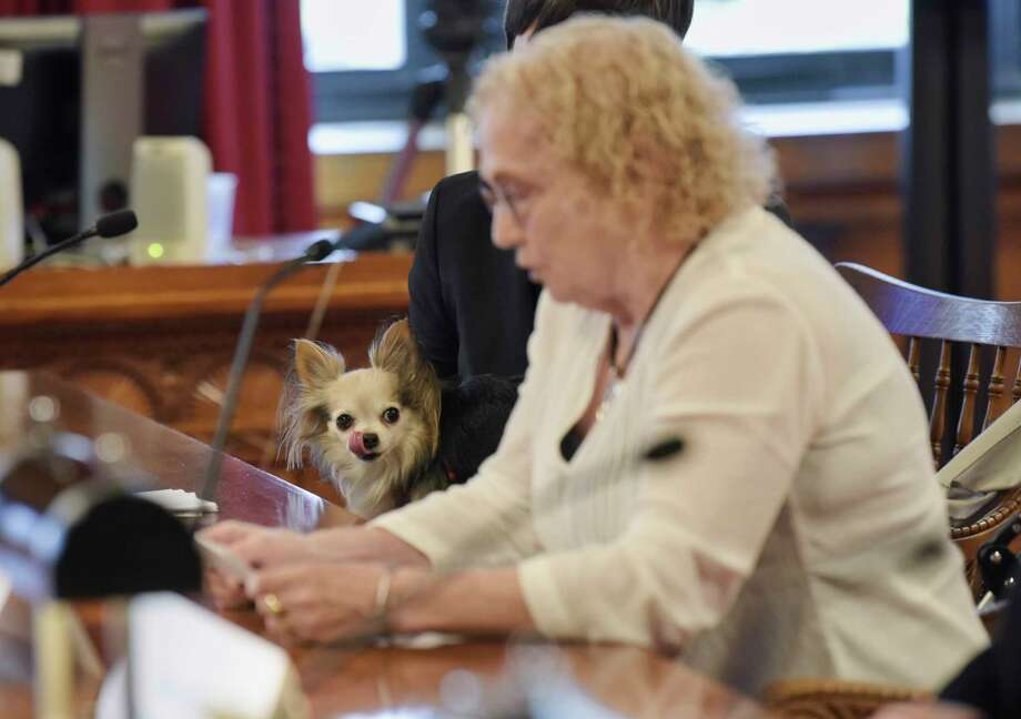 Julianne White of Glens Falls, a client of the Legal Aid Society of Northeastern New York testifies at a public hearing at the New York State Court of Appeals on the continuing unmet civil legal services needs of residents of New York State as her therapy dog, Fiona, watches on Monday, Sept. 24, 2018, in Albany, N.Y.  (Paul Buckowski/Times Union) Photo: Paul Buckowski, Albany Times Union / (Paul Buckowski/Times Union)