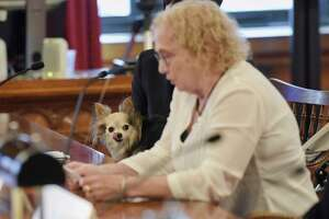 Julianne White of Glens Falls, a client of the Legal Aid Society of Northeastern New York testifies at a public hearing at the New York State Court of Appeals on the continuing unmet civil legal services needs of residents of New York State as her therapy dog, Fiona, watches on Monday, Sept. 24, 2018, in Albany, N.Y.  (Paul Buckowski/Times Union)