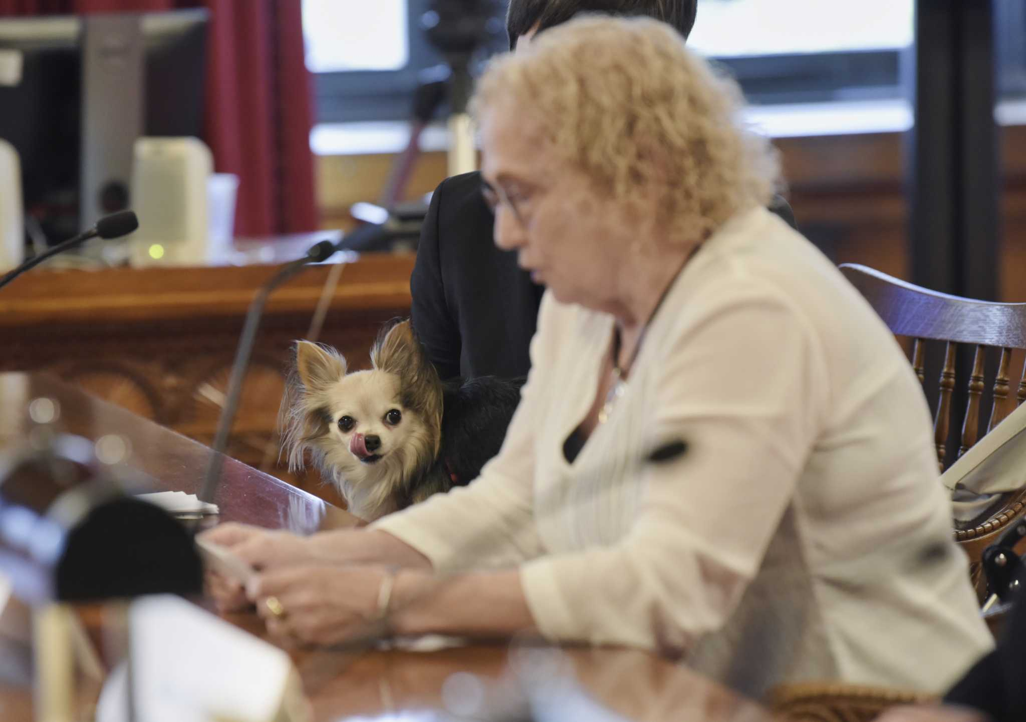 Woman, 76, appears with dog at Court of Appeals at hearing on civil legal services for poor - Times Union