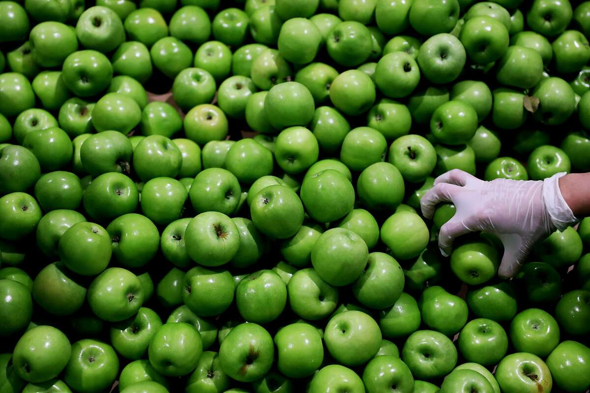 A Salesforce employee picks up Granny Smith Candy apples to inspect at the San Francisco - Marin Food Bank, located at 900 Pennsylvania Ave., in San Francisco, Calif., on Wednesday, September 19, 2018. Salesforce gives its employees a week of PTO for community service and on Wednesday, eleven Salesforce employees used two hours of that time to volunteer at the food bank.