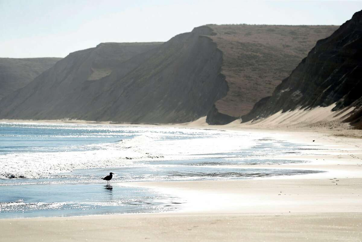 Drakes Beach at Point Reyes National Seashore in September 2018, before the elephant seals arrived.