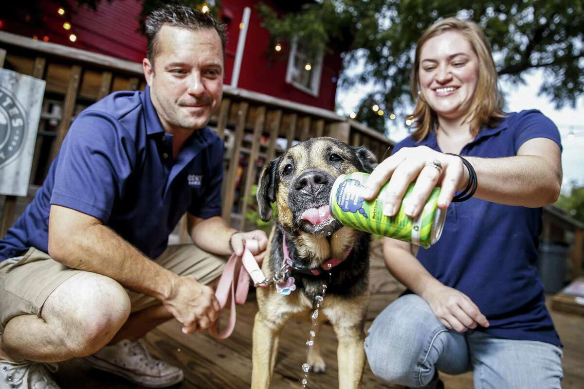 Chloe the dog tries the Good Boy Dog Beer IPA Lot in the Yard drink developed by Henderson Heights owners Megan and Steve Long Thursday Sept. 20, 2018 in Houston. The couple has launched three flavors of Good Boy Dog Beer including pork, chicken and vegetable based drinks.