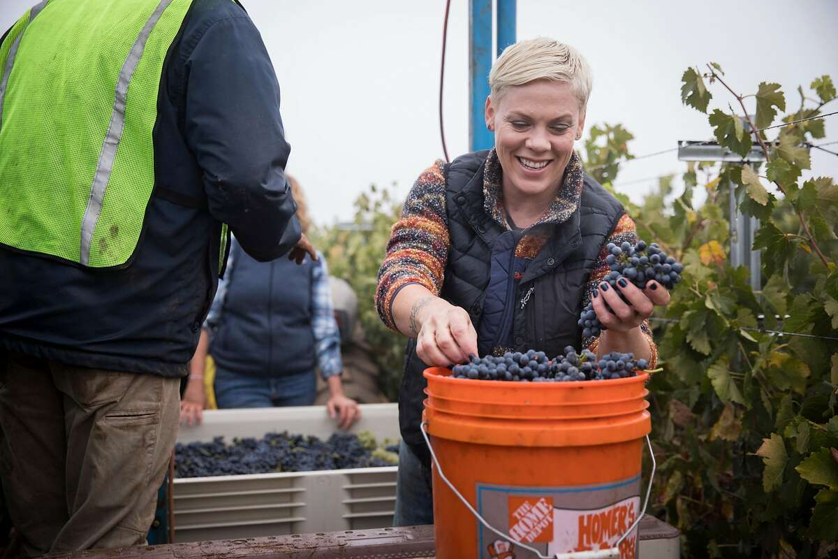 Alecia Moore sorts through grapes at her vineyard, Two Wolves Estate Vineyard, on Monday, Sept. 24, 2018 in Santa Ynez, Calif.