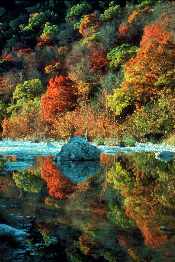 The annual fall explosion of colors transforms the canyons of Lost Maples State Natural Area, especially along the Sabinal River, where an ancient and rare stand of Bigtooth Maples still survives. Photo: Leroy Williams / Texas Parks And Wildlife / handout