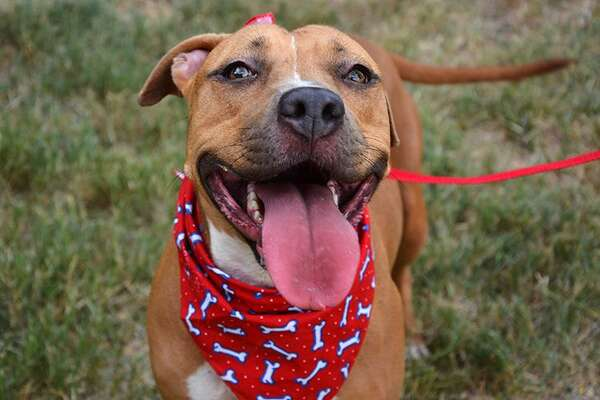 Pet adoption fees waived, reduced to $1 in San Antonio, San