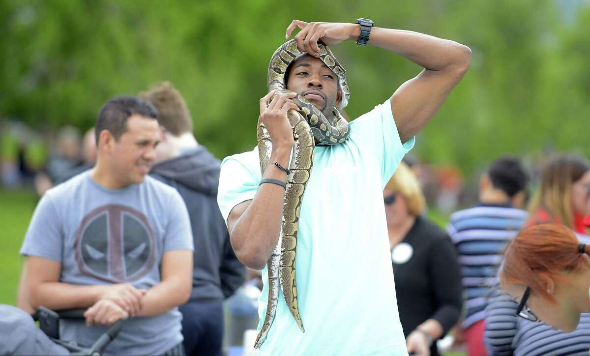 FILE - Rahien Farrow uncoils a Boa Python as part of the Chester Addison Community Reptile Club exhibit at STEMFest in Mill River Park.