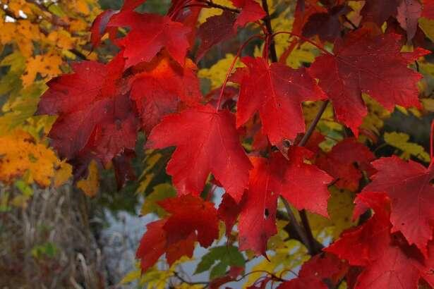 Northeast fall foliage. Photo: Peter Bowden