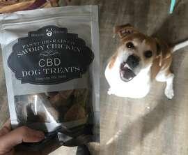 My dog admires a bag of Holistic Hound CBD dog treats.