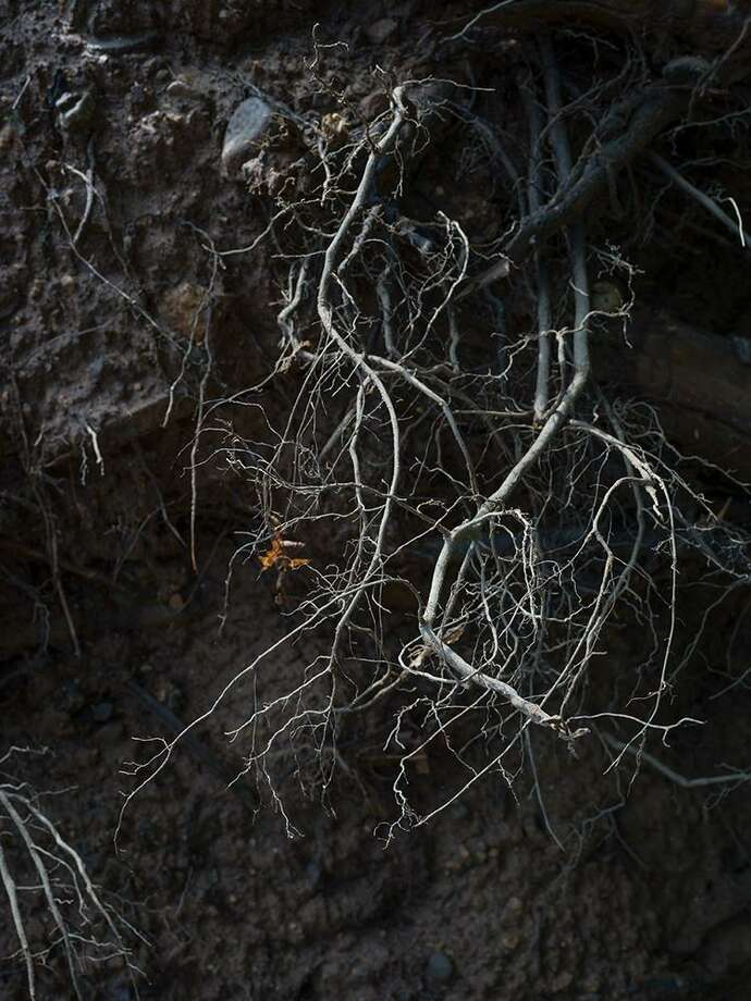 Marion Belanger will have a project involving roots photos and soil material at Yale Campus West. Photo: Artspace / Contribued Photo / Hasselblad X1D