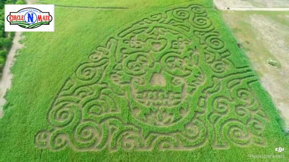 From Oct. 5 through Oct. 28, the Circle N Maze will provide 3 miles of trails that form this year's Sugar Skull design in honor of Dia de los Muertos. Photo: Courtesy, Circle N Maze