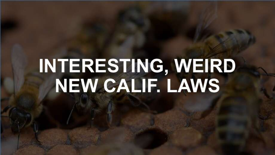 Click through the gallery to see the most interesting and peculiar laws in California as of fall 2018. Photo: FRED TANNEAU/AFP/GETTY