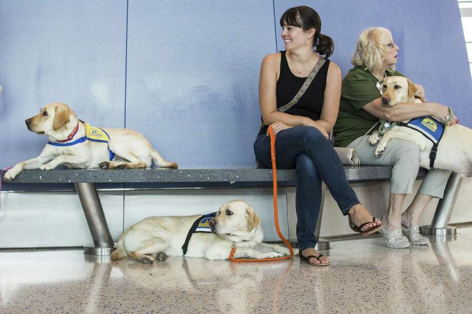 Robyn Schapiro, left, and Maryellen Bunn take a break with their service dogs, in Terminal C at George Bush Intercontinental Aiport as they participate in a program that helps people with special needs train both their companion dogs and themselves about coming to and navigating around the airport on Thursday, Sept. 27, 2018, in Houston. Photo: Brett Coomer, Houston Chronicle / Staff Photographer / © 2018 Houston Chronicle