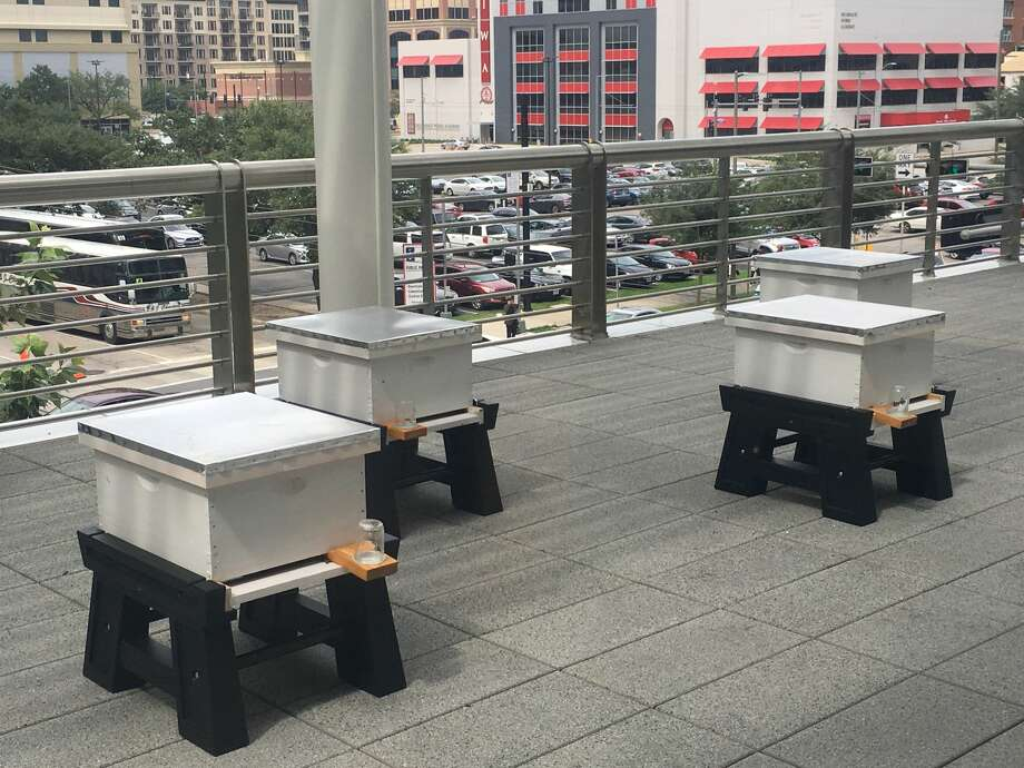If you hear a little more buzzing in downtown Houston there is a good reason. A few extra thousands workers are hard on the job making the city a little brighter. On the Rusk Street balcony at the George R. Brown Convention Center overlooking a brightly-lit view of downtown Houston reside tens of thousands of honey bees, tasked with making the convention center self-sustainable. Photo: Houston First