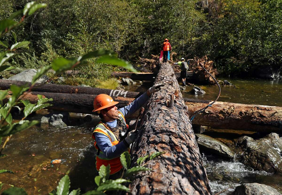 Carlos Favela removes a cable after a helicopter placed a tree on first day of Yurok Indian Tribe restoration project on South Fork of Trinity River in Trinity County, Calif. on Tuesday, September 25, 2018.