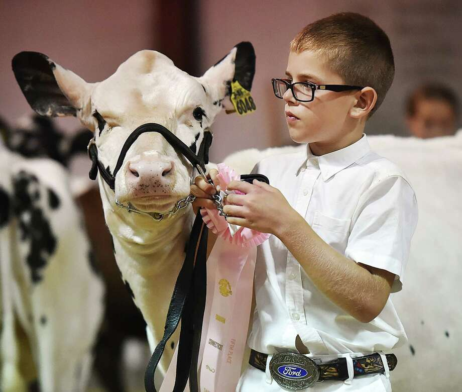 Wallingford resident Joshua Durant, 10, a member of the Farm River Gang 4H exits the show ring with Stein, his 6-month-old holstein carrying a fifth place ribbon at the dairy cattle showmanship competition at the 99th annual Durham Fair Friday, September 28, 2018. The fair continues Saturday 9 am to 11 pm and Sunday from 9 am to 7 pm. Photo: Catherine Avalone, Hearst Connecticut Media / New Haven Register