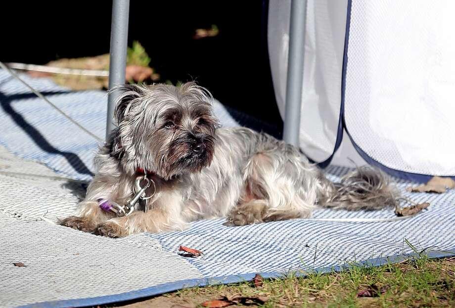 Dogs of the Wagener Park Invitational Photo: Paul P. Adams/Huron Daily Tribune