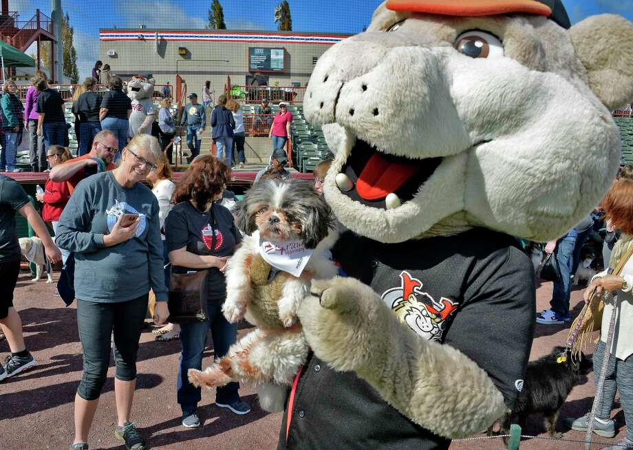Kristin Smith-Hoin, left, of Rotterdam looks on as her 11-yr-old Shih Tzu rescue dog gets a hug from ValleyCats mascot SouthPaw during the annual Paws in the Park Walk for Animals at Joe Bruno stadium Saturday Sept. 29, 2018 in Troy, NY.  (John Carl D'Annibale/Times Union) Photo: John Carl D'Annibale / 20044940A