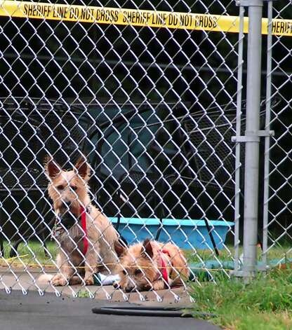 Two dogs in the backyard of 9403 Rt. 66 in Poestenkill, scene of a triple shooting Tuesday afternoon July 13, 2010.  (John Carl D'Annibale / Times Union) Photo: John Carl D'Annibale