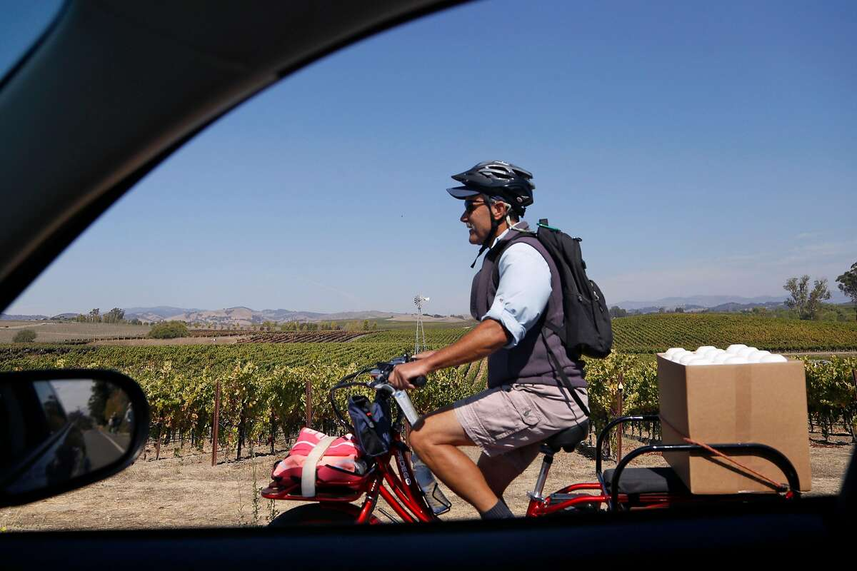 Napa Valley Bike Tours guide Ric Brucia en route to another winery in Napa, Calif., on Friday, September 28, 2018.