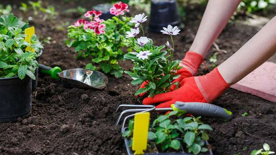When to Plant Flowers: A Guide for All Seasons - San Antonio Express ...