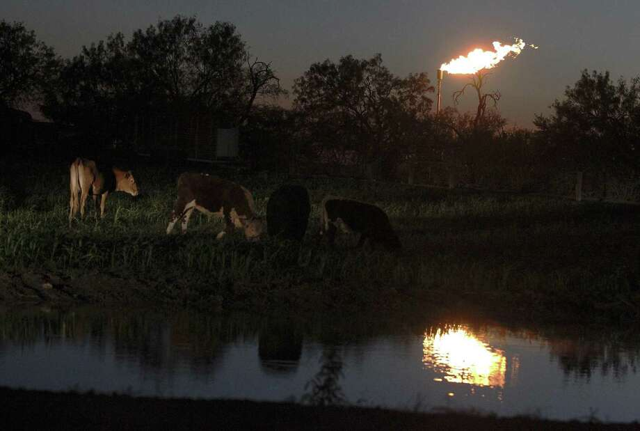 Cattle roam next to a pond at dusk as a flare burns off excess gas at a nearby oil well site at the outskirts of Karnes City, Texas. (Kin Man Hui/San Antonio Express-News) Photo: Kin Man Hui, Staff / San Antonio Express-News / ©2014 San Antonio Express-News