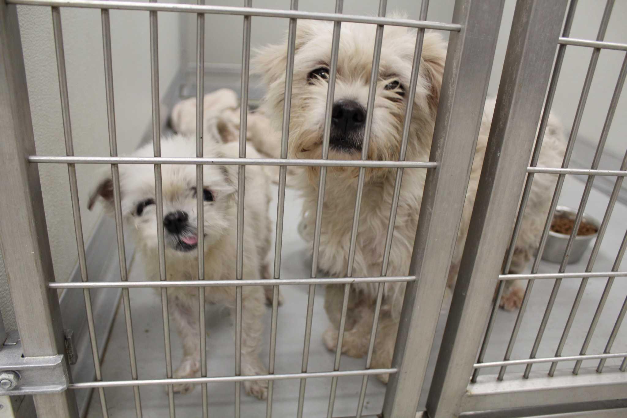 Dog Adoption Shows Sept
