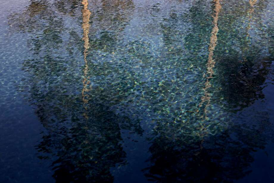 Trees are reflected in a pool at the home of Lance and Barbara Cottrell, in Santa Rosa, Calif., on Saturday, June 30, 2018. Photo: Yalonda M. James / The Chronicle