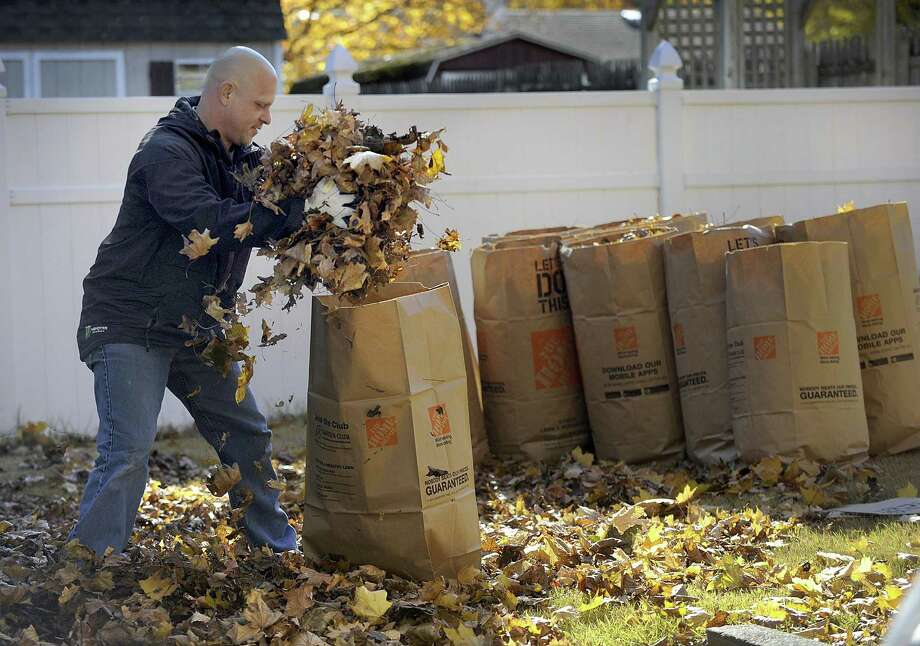 "Michael Pruneay, 43, bags leaves in his yard on Hayestown Road in Danbury Monday morning, Nov. 7, 2016. He says he ""loves Fall - but leaves I don't love."" When he's finished for the season he will have filled 45-50 large leaf bags which will be picked up by the city highway department as a service to residents and deliver to Ferris Mulch. Photo: Carol Kaliff / Hearst Connecticut Media / The News-Times"