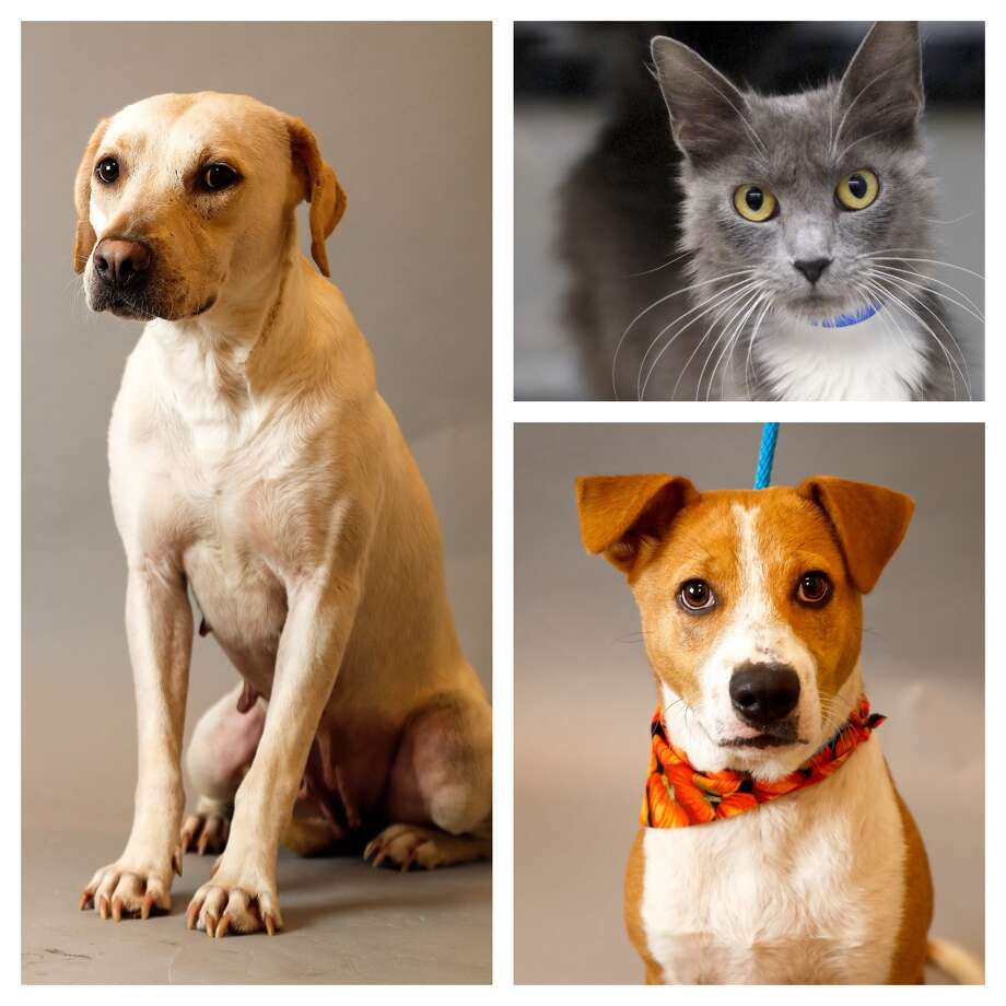 PETS OF THE WEEK: SPCA  Photo: Karen Warren, Staff Photographer / © 2018 Houston Chronicle