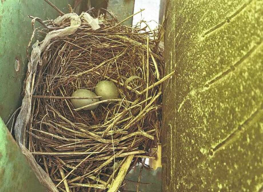 A robin's nest sits between the tires of a 3020 John Deere tractor.