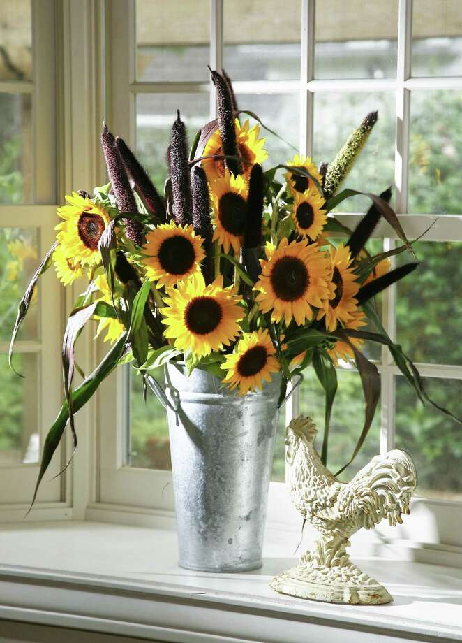 Sunflowers pair with burgundy millet. Photo: John Everett / John Everett / John Everett