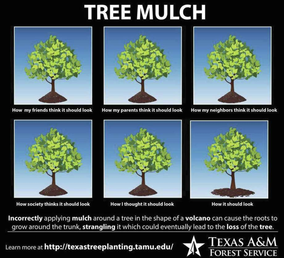 Potter says make sure mulch is not piled up onto the main trunk of the plant. Too much mulch, especially in the shape of a volcano, will only be detrimental to the plant. Having mulch too close to the trunk will choke the plant and make it more susceptible to disease and insect problems.