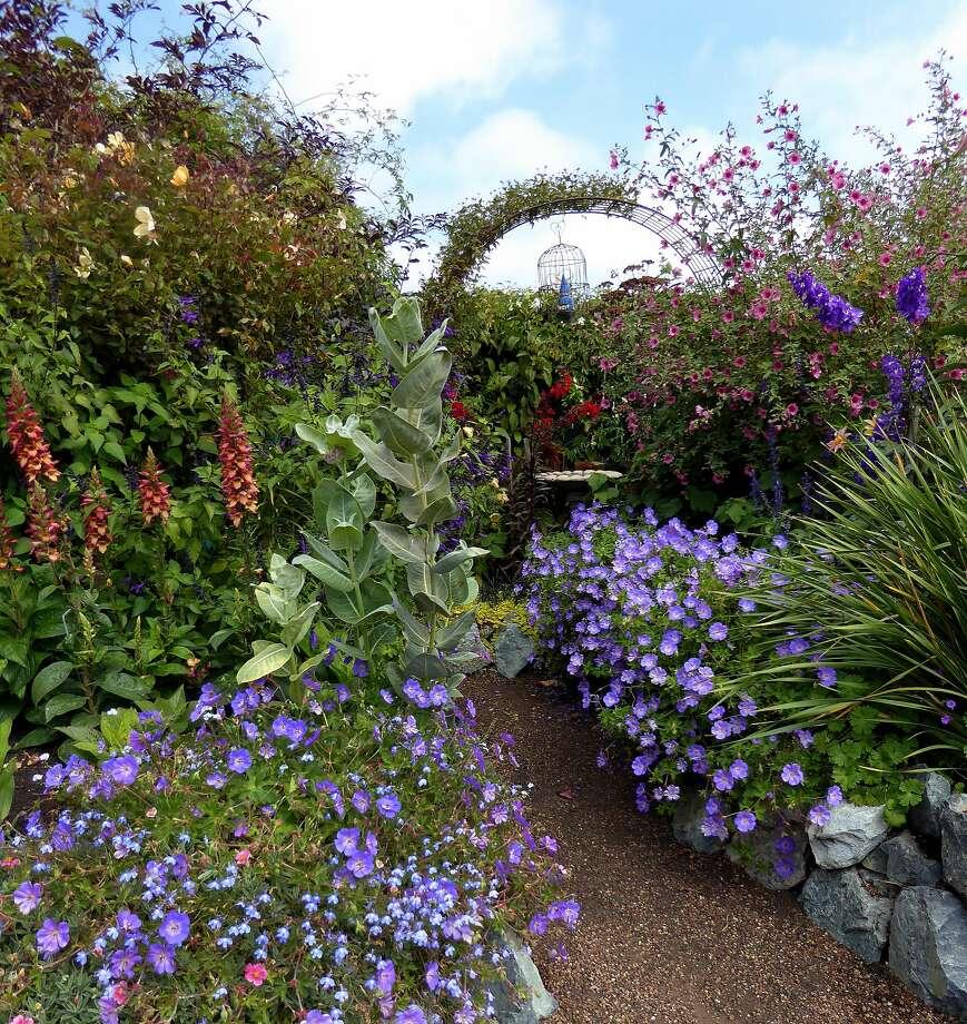 Geranium 'Rozanne' (in foreground) lines a walkway. Photo: Annie's Annuals & Perennials